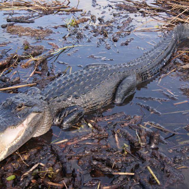 Everglades na Flórida