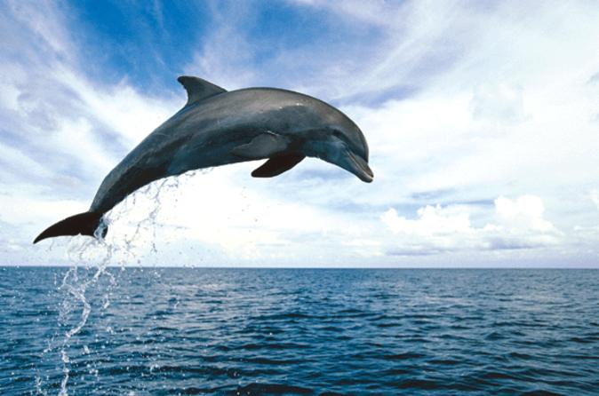 o que fazer em Key West ver golfinhos em key west